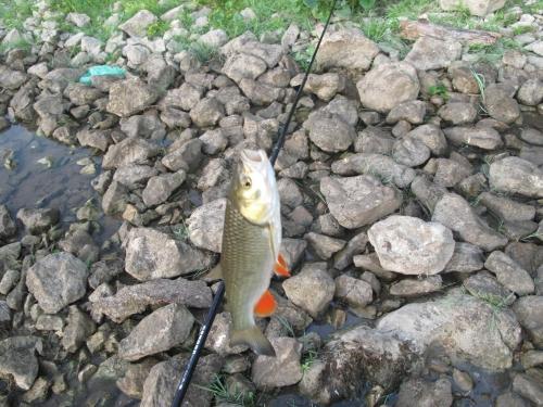 рыба плещется но не клюет